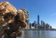 ostriche new york