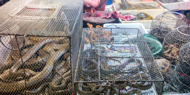 Chinese typical fish and living animals market