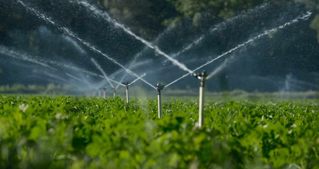 Water sprinklers irrigating a field.