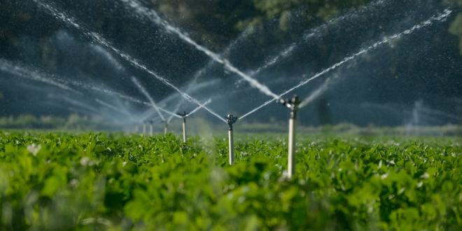 La nuova PAC in contrasto con Green Deal e obiettivi sul clima. Ambientalisti in rivolta contro la proposta di Politica agricola comunitaria