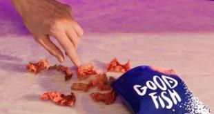 Goodfish chips pelle salmone sacchetto mano