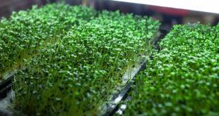 coltivazione idroponica orto urbano