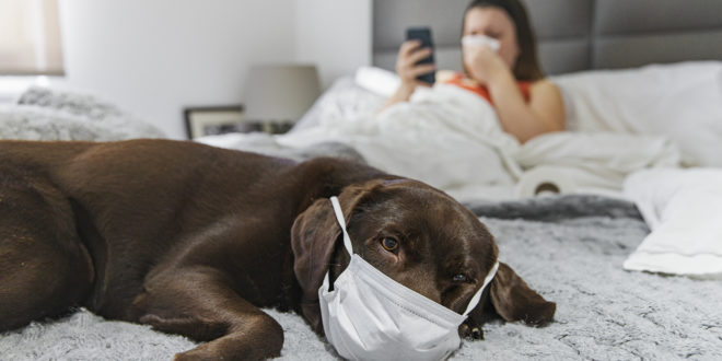 Dog with Mask on bed