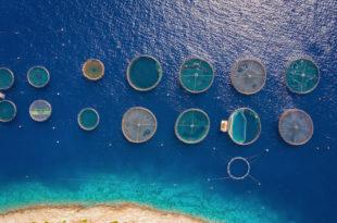 acquacoltura, immagine dall'alto allevamento ittico
