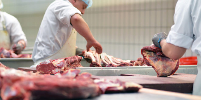 macello macellare industria alimentare carne carcasse proteine allevamento macelli