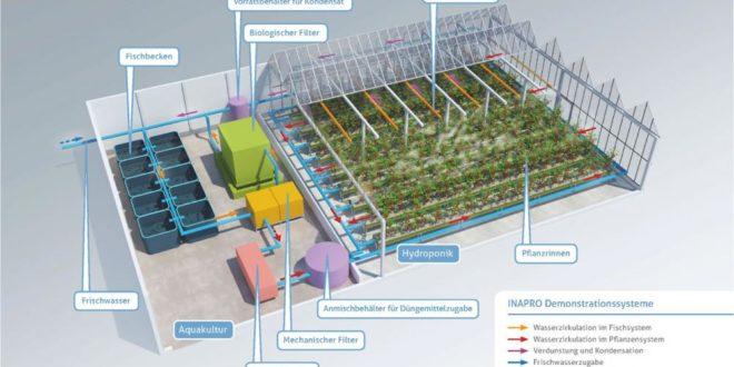 Acquaponica per allevare pesci e coltivare ortaggi: gli scenari futuri nell'impianto tedesco di Mueritzfischer