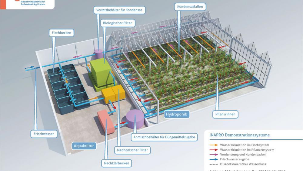 Aquaponics para criar peixes e cultivar vegetais sem desperdício 4