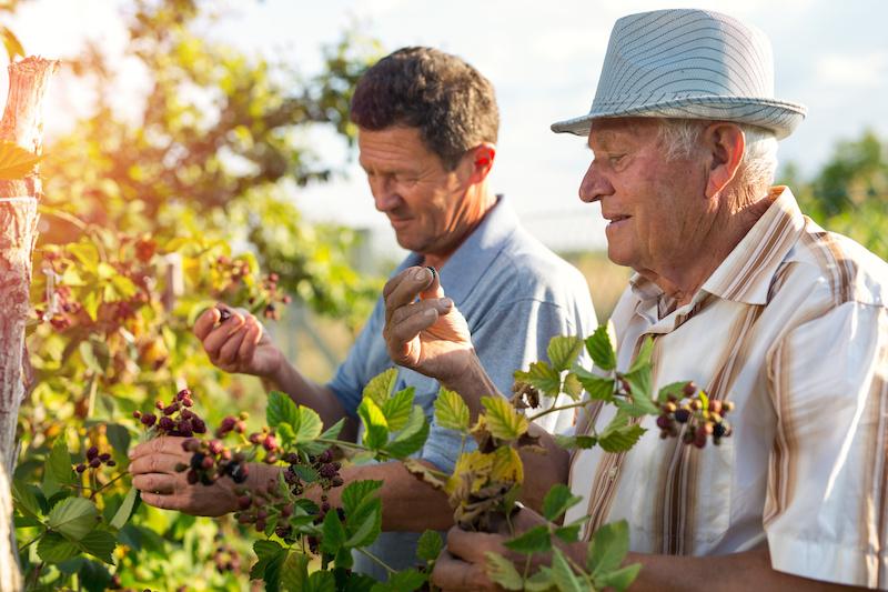 Orgânico e polêmica: agricultura convencional precisa ser convertida 8