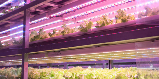 Metro Farming, a Seoul la fattoria idroponica nella metropolitana produce 30 chili di verdura al giorno per la caffetteria di una stazione