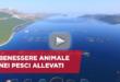benessere animale pesci acquacoltura video