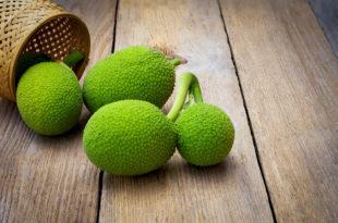 Breadfruit frutto albero del pane