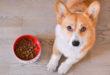 Croccantini per cani, come scegliere i prodotti migliori? Il test di Altroconsumo su 27 marchi di cibo secco