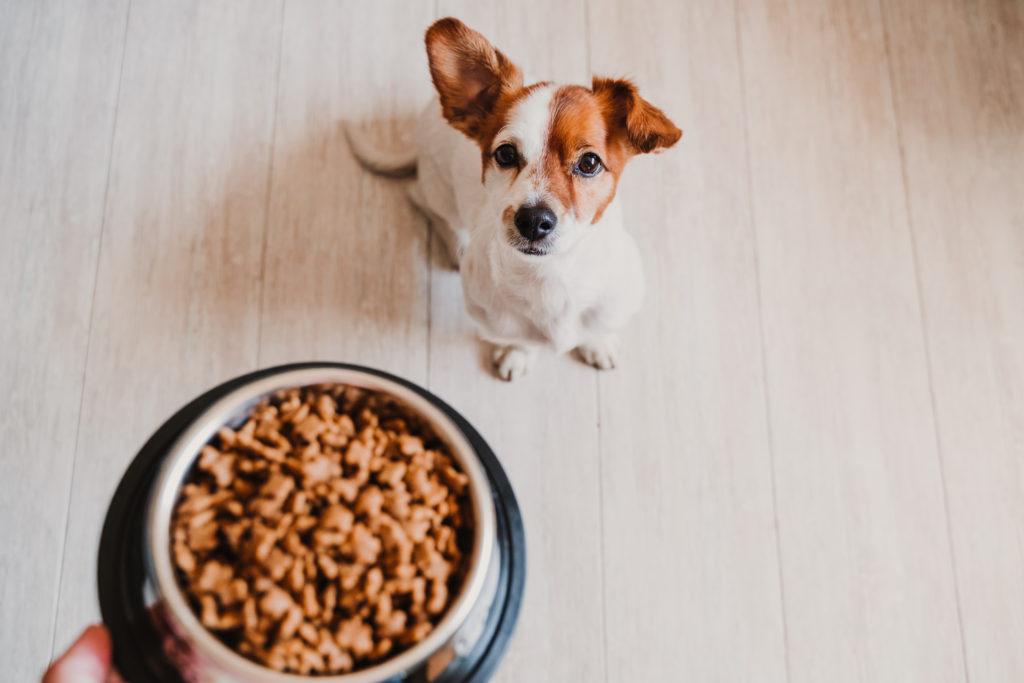 croccantini per cane ciotola