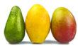 Avocado, mango e altri frutti tropicali coltivati in Italia. Caratteristiche e pregi della produzione nostrana