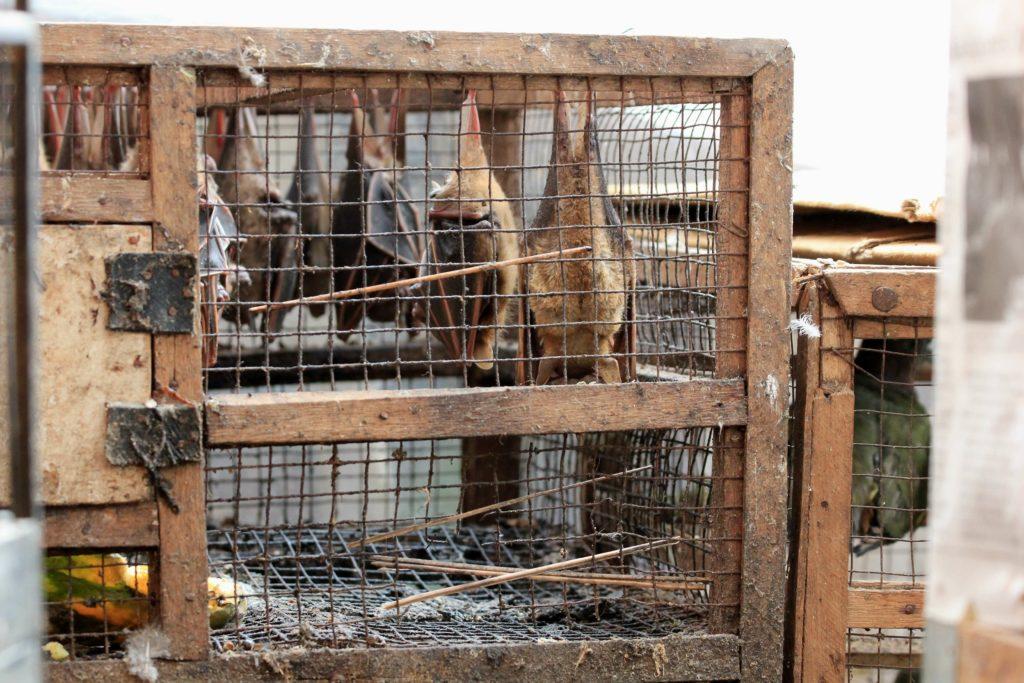 Mercado úmido e biodiversidade, como proteger animais e humanos 4
