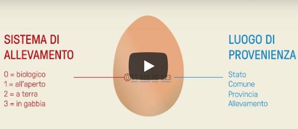 Uova: tutti i segreti del codice stampato sul guscio in un video dell'Istituto zooprofilattico delle Venezie