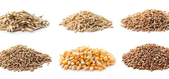 L'Europa chiede più bio, ma per farlo servono i semi giusti, non quelli delle multinazionali