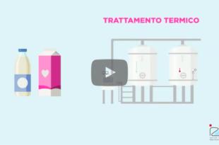 video izsve latte trattamento termico