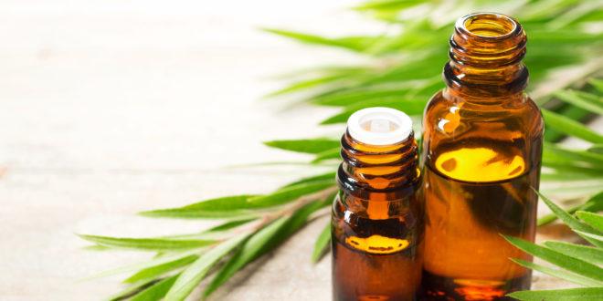 Tea tree, cajeput e niaouli: ci sono rischi legati agli integratori con oli essenziali di melaleuca? Il parere dell'Anses