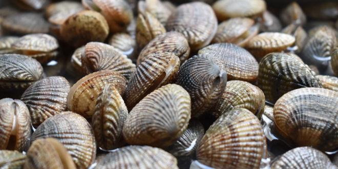 L'acquacoltura ha cancellato la biodiversità dei molluschi lungo le coste cinesi