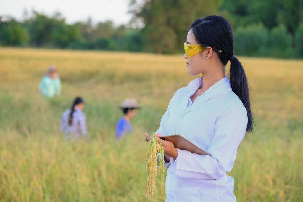 ricercatrice riso risaia