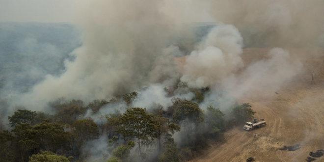 incendi amazzonia brasile animal equality deforestazione