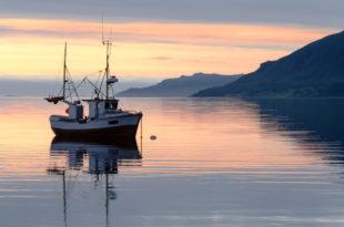 Fishing boat at sundown in the fjord pesce pesca peschereccio